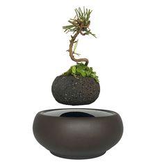 Levitating Potted Floating Pot Air Bonsai Natural Volcanic Stone Pots for sale online Bonsai Plants, Potted Plants, Floating Plants, Magnetic Levitation, Unique Plants, Types Of Plants, Green Plants, Live Plants, Plant Decor