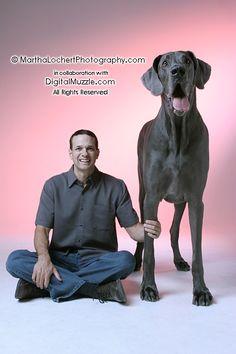 Giant George - world's biggest dog
