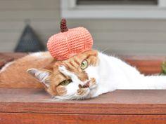 Cat Pumpkin Hat Crochet Pattern - Tiny Curl Crochet Crochet Pumpkin Hat, Crochet Fall, All Free Crochet, Hat Crochet, Crochet Pet, Different Crochet Stitches, Pumpkin Colors, Cat Pumpkin, Yarn Tail