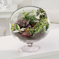 Potted Plant Society | Sharing the Joy and Knowledge of Growing Potted Plants Creatively | Page 38
