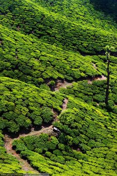 The tea plantations of Kerala, India. I would love to go on an adventure holiday here - walking, cycling, exploring. Bliss!