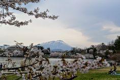 255:「盛岡の高松公園で撮影しました。盛岡市内から見える岩手山を背景に撮影しました。」@高松公園