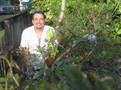 How to propagate Dragon Fruit (pitaya)