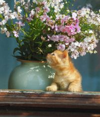 Top 5 Summer Cat Health Concerns #cats #cat health and wellness