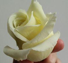 Роза полноразмерная Флешмоб Rose Clay, Sweet, Flowers, Handmade, Food, Table, Candy, Craft, Royal Icing Flowers