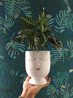 jungalow-zebra-plant-aja-teal-wallpaper