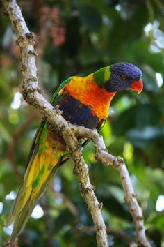 exotic birds in their tropical environment