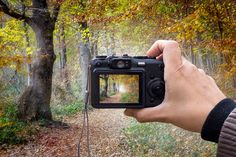 Forest on the digital camera by JCB Photogr@phic on @creativemarket