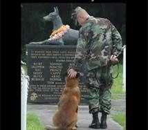 Happy Memorial day, for the fallen marine war dogs. So neat. War Dogs, Love My Dog, Puppy Love, Military Working Dogs, Military Dogs, Military Service, Military Veterans, Police Dogs, Military Photos