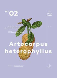 A Few Plants 02 in Design