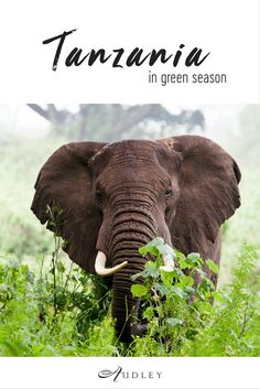 Tanzania Specialist Zoe has just returned from exploring both Tanzania's northern and southern parks in green season. She began in the lesser known Tarangire National Park, famed for its huge herds of elephants, before moving onto Lake Manyara; an amazing jungle-like park with beautiful flocks of flamingo and tree-climbing lions.