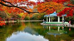 Autumn foliage in National Park, Korea (November Countries Of The World, Vacation Destinations, South Korea, Seoul, Adventure Travel, Beautiful Places, National Parks, Places To Visit, Asia