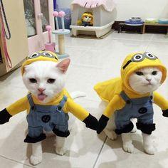 Irrisório! Modelagem tão engraçada do transporte dos Minions micky Pet cão gato vestido transformação roupa com chapéu