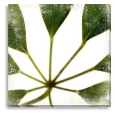 New Era Zen XIV Indoor/Outdoor Canvas Print by Sia Aryai - NE73352