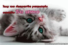 Imágenes de gatitos tiernos con la frase te amo para facebook