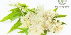 クイーン・オブ・メドウ(草原の女王)とも呼ばれるメドウスィート。その味は甘く、香りはアーモンドのよう。何だか魅惑のハーブなのですが、頭痛、腹痛など痛みを和らげるという働きを持ち、また解熱や潰瘍の治療にも役に立つ素晴らしい女王なのです。 #エッセンシャルオイル#アロマレシピ#アロマテラピー#ハーブ#ガーデニング