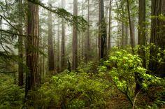 california greens (by Sam Scholes)
