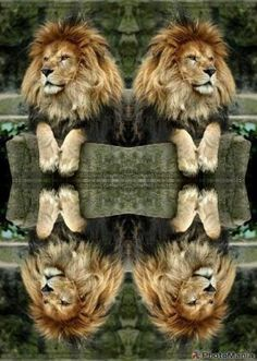 """""""Seeing Double!""""                  ♥"""