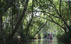 Selva en Kerala