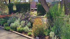 Image result for australian native garden designs