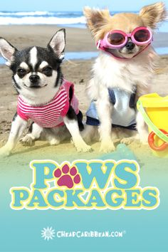 Our new Caribbean #PawsPackages include supervised beach playtime for your fur baby.  Treat your pet to the beach!