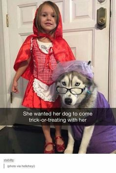 Funny pictures about Early Contenders For Best Halloween Costume. Oh, and cool pics about Early Contenders For Best Halloween Costume. Also, Early Contenders For Best Halloween Costume photos. Cute Funny Animals, Funny Animal Pictures, Funny Cute, Funny Dogs, Funny Husky, Hilarious, Husky Meme, Funny Memes, Diy Funny