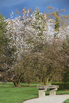 Spring v Arboretumu