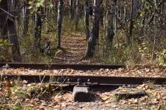 FortWhyte Alive In The Fall - So I Was Thinking Canadian Pacific Railway, Paths, Trains, How To Find Out, Adoption, This Or That Questions, Fall, Foster Care Adoption, Autumn