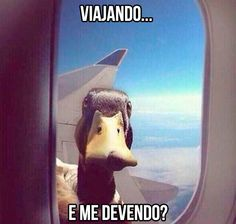 What the Duck ! There is a duck looking thorugh the window on the wing of the plane. Il y a un canard sur l'aile de l'avion qui regarde par la fenêtre Animals And Pets, Baby Animals, Funny Animals, Cute Animals, Funny Animal Pictures, Funny Photos, Funny Images, Duck Pictures, Bing Images