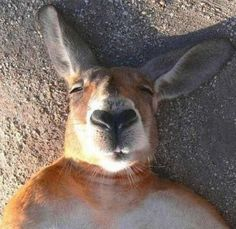 Animals Look Just As Silly Taking Selfies As We Do – 25 Pics
