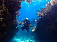 Dive dive dive... Key Largo :) ~ w/ @getolympus E-M5 Mark 2  #scubadivergirls #floridakeys #divewithOLYMPUS