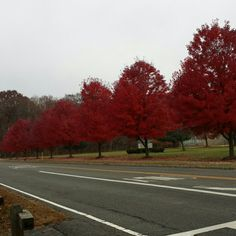 A picture i took of tree @horse shoe lake I'm selling a picture I took @horseshoe lake in Roxbury nj im selling a 4 by 6 5 by 7 8 by 10 you comment with your size Other
