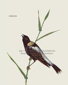 Bird Fabric Block  Bobolink Songbird  Repro by KatyDidsFabrics