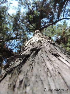 Título: Tree; Autor: Jacuinde Medina Christian; Fecha de realización: 24 de Diciembre 2016; Velocidad de Obturación: 1/250 seg; Apertura de Diafragma: f/3.3; ISO: 100; Distancia Focal: 4.3 mm