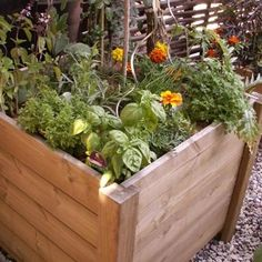 Cultiver des légumes sur son balcon ou sa terrasse