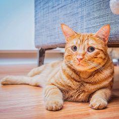 #kucingbikingemes ini kiriman dari : @yohananddesmond    punya #kucingbikingemes juga? follow dan tag @kucingbikingemes  jangan lupa pakai #kucingbikingemes   via #catsofinstagram #cat #cats #catofinstagram #cat_of_instagram #catstagram #catsoftheworld #catslover #catgram #catagram #catslife #kucing #kucingku #kucinglucu #kucingsaya #kucingimut