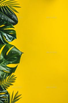 Buy Tropical leaves on yellow background by klenova on PhotoDune. Tropical leaves on yellow background, minimal concept, flat lay Leaves Wallpaper Iphone, Flower Phone Wallpaper, Pastel Wallpaper, Cute Wallpaper Backgrounds, Aesthetic Iphone Wallpaper, Cute Wallpapers, Tropical Background, Leaf Background, White Background Photo