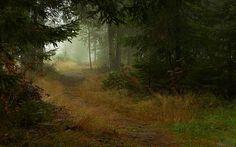 Bella immagine con un pieno meravigliosa natura perk.