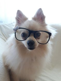 My dog is so smart!🤓😍  #doggy#cute  |💞