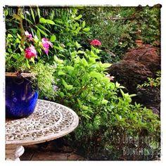 in diretta dal giardino:fiori rosa nella giungla di luglio. Buongiorno giardinieri! #giardino #giardinoindiretta #piante #fiori