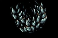 Attack the Block alternative movie poster by Joe Wilson now featured on AMP