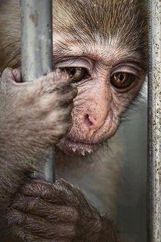 Monkey sadness