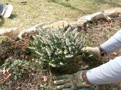 Abonos naturales: lo mejor para la tierra