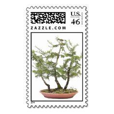Bonsai Photo 2 #bonsai #photo #photograph #bonsai #design #bonsai #product #bonsai #gift #custom bonsai