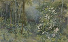 Alfred Parsons (English, 1847-1920) Lillies and Bamboo, n.d. Watercolor on paper, 11-1/2 x 18 in. Signed at lower right: ALFRED PARSONS. Gift of the Baker/Pisano Collection.  2001.9.184