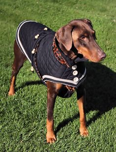 Cognac is wearing a quilted black Dog coat with  leopard trim. Specially designed for Dobermans . www.gabriellapetstyle.net