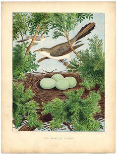 *The Graphics Fairy LLC*: Instant Art Printable - Beautiful Bird, Nest & Eggs