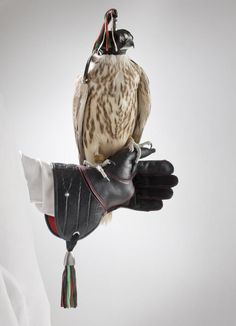 The kind of luxury fashion, beauty, culture and experience storytelling you didn't know you were missing. Hunting Gloves, Birds Of Prey, Culture, Hawks, Animals, Ideas, Animales, Animaux, Animal