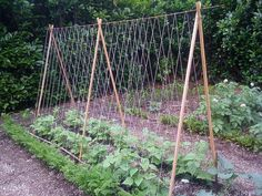 Tomato DIY: Pruning and Trellises - Homemade Trellis for the garden – Trellises – Ideas of Trellises Bean Trellis, Bamboo Trellis, Tomato Trellis, Cucumber Trellis, Diy Trellis, Garden Trellis, Veg Garden, Vegetable Garden Design, Tomato Garden