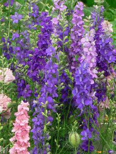 Larkspurs are the birth flower for July. Description from pinterest.com. I searched for this on bing.com/images
